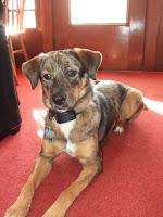 Roxy the mutt puppy