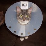 kitten with cone around her head