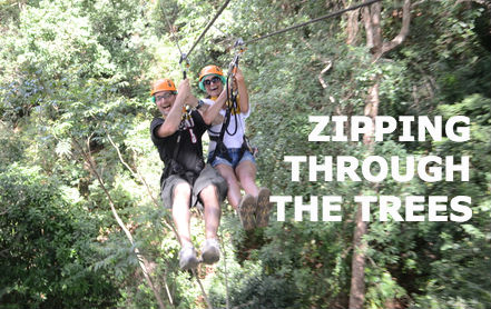 couple ziplining through trees.