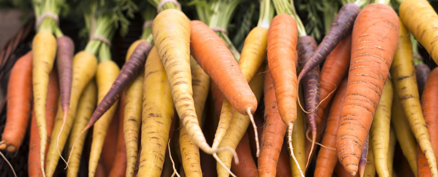 freshly harvested, colorful organic carrots at farmers market
