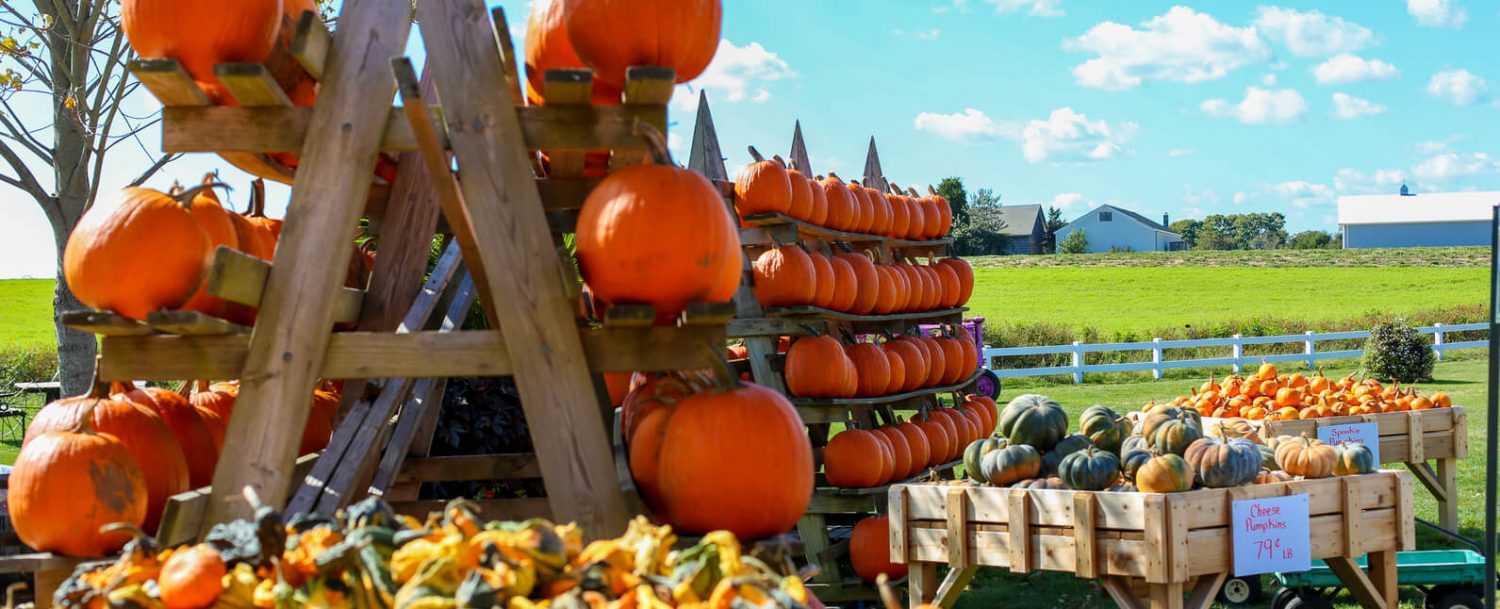 You Will Have The Best Time At These Ohio Pumpkin Patches White Oak Inn