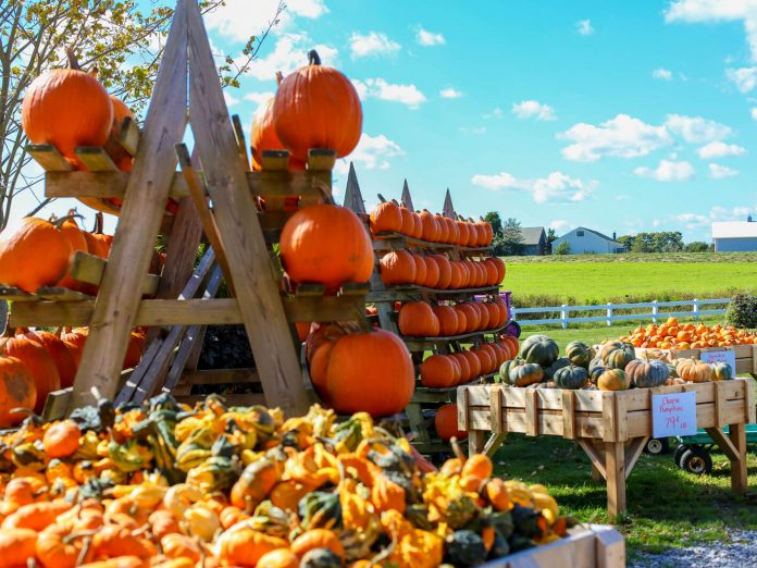A farmstand filled with a variety of pumpkins at a pumpkin patch in Ohio.