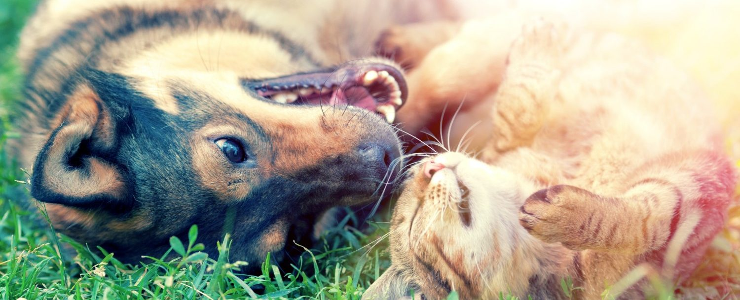 Dog and cat playing together on the grass.