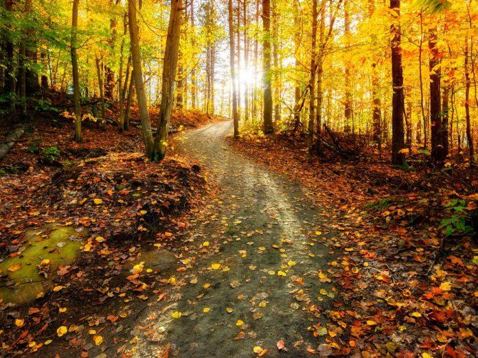 Sun shining through the trees on the kokosing gap trail during the autumn season.