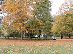 Fall foliage at The White Oak Inn.